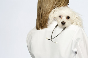 Fearful Dog and Vet Relationship